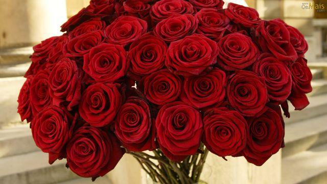 Buquês de rosas vermelhas